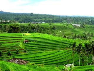 Paddy fields Jatiluwih Tabanan Regency