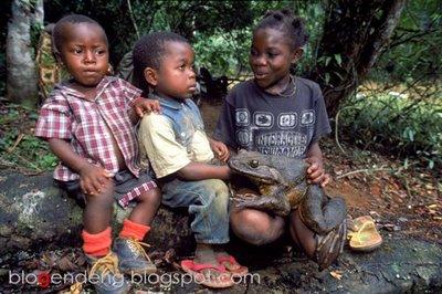 [african-frog-01+copy.jpg]