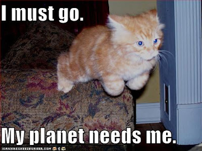 Voo online 18 Jan 2013 Funny-pictures-planet-needs-superkitten