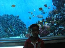 อยากให้มีตู้ปลาสวยงามที่โรงเรียนอนุบาลราชบุรี