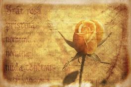 Mawar Khayalan