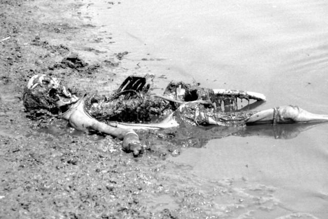 Dead Bodies in Water