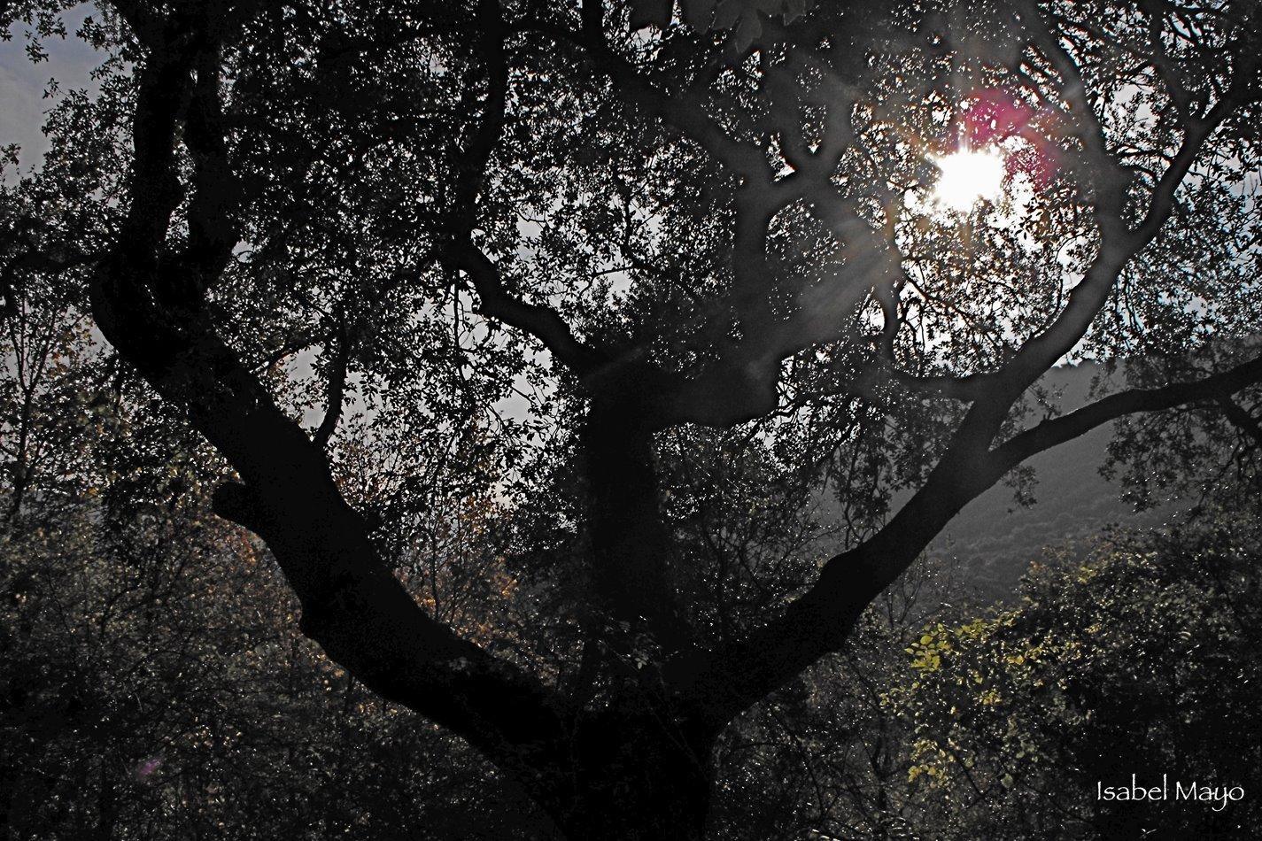 [El+árbol+oscuro]