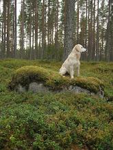 Nelly i skogen