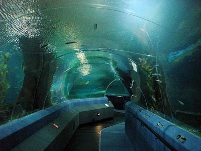 Unterwasser-Tunnel im National Aquarium of New Zealand