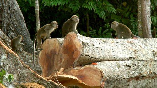 monkeys_crying.jpg