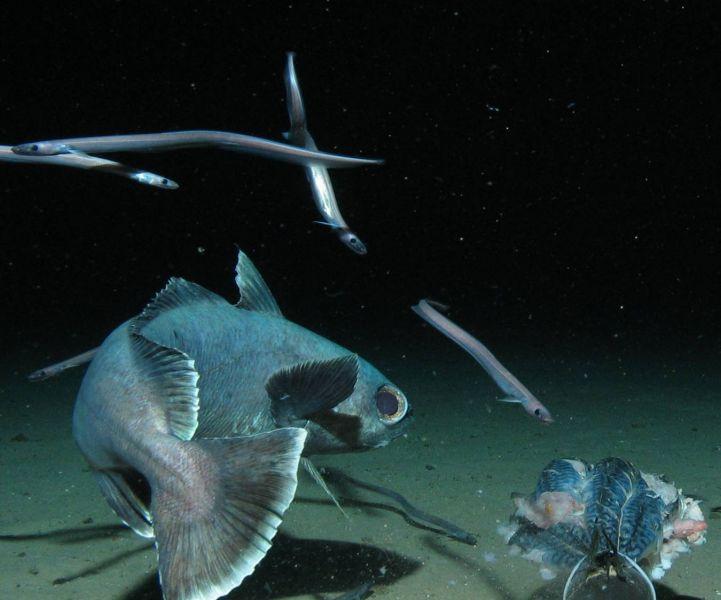 fish schooled senses of the deep sea sea fish 721x600