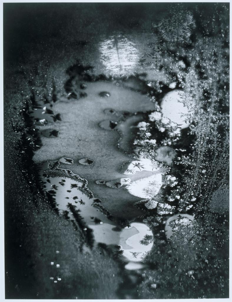 Nature Into Art With Minor White