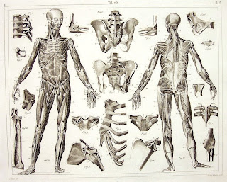 figure drawing: the human skeleton and muscles - johann georg heck, Skeleton