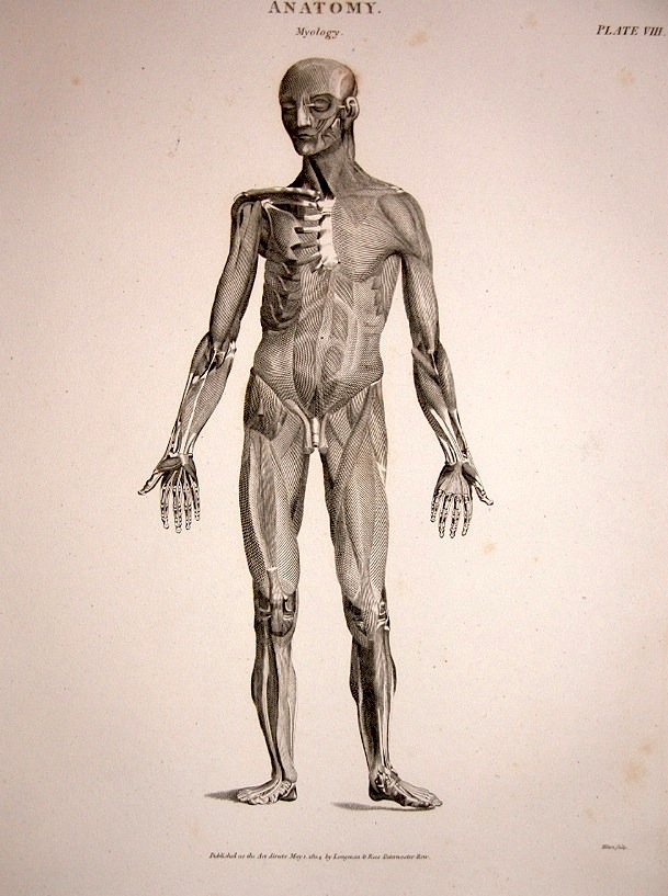 Figure Drawing How To Draw The Muscles Of The Human Body Old