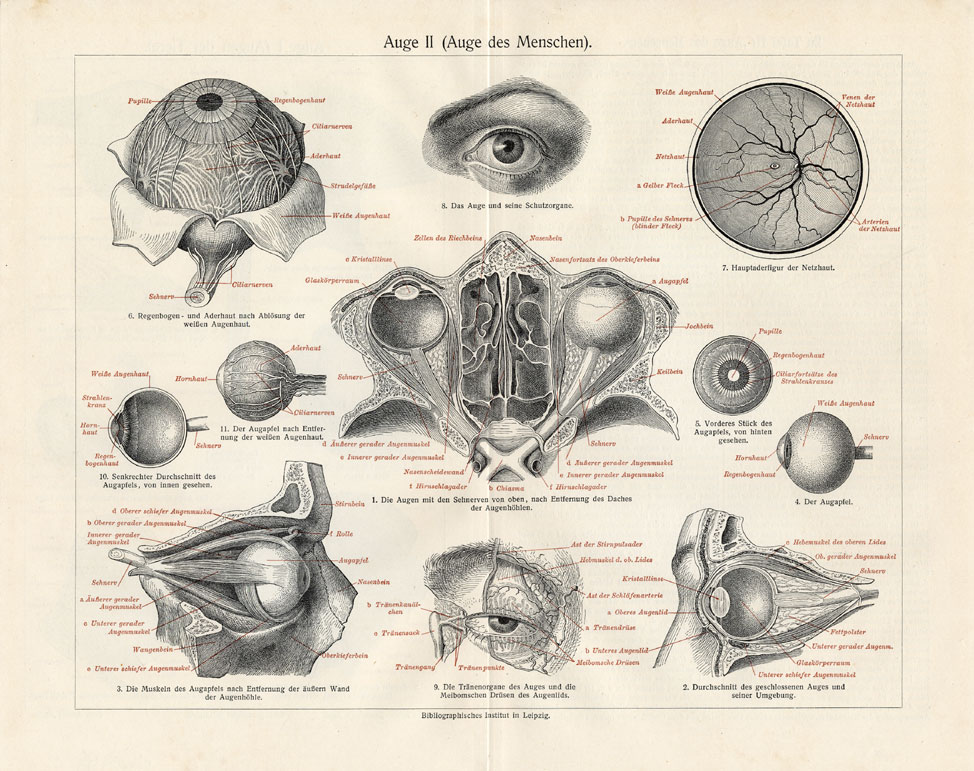 Eyes Anatomy Drawing Anatomy of The Eye From From a