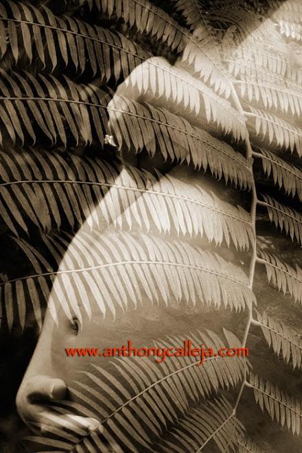 Artistic Hawaii Maternity Photography