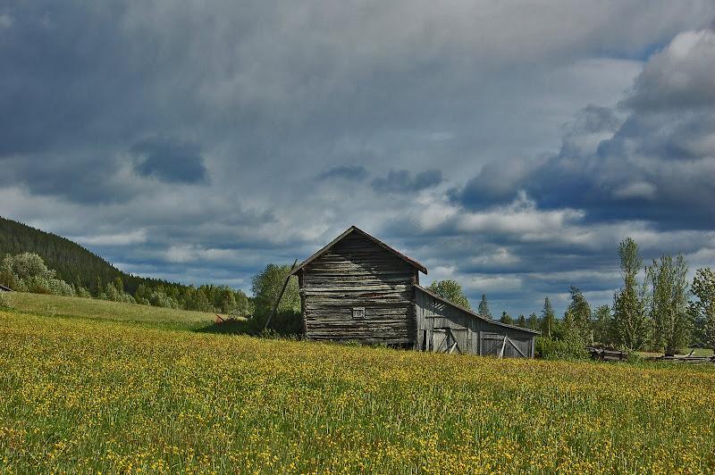 suecia campo verano