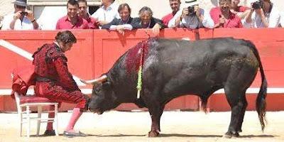 día negro golondrina en Pamplona