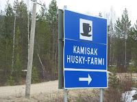 Husky farming #1