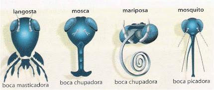 Piezas bucales de artrópodos