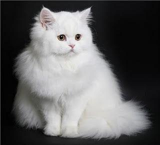 Kisah Hati I Miss All My Cats