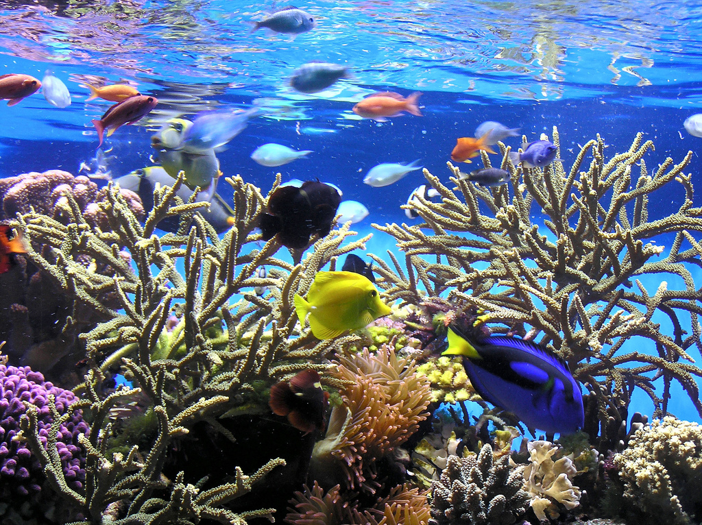 New aquariumist freshwater vs saltwater for Saltwater reef fish