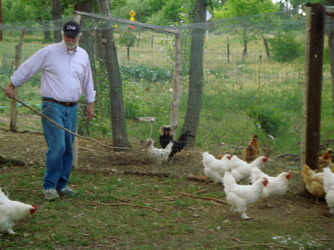 Brantly the chicken herder