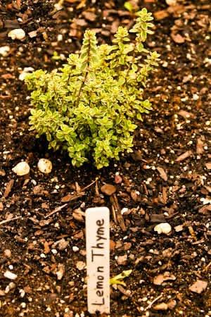 Friday Night Herb Garden Photos and Recipes Using Fresh Herbs: 2010 ...