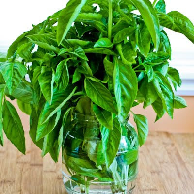 preserving basil in water