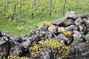 Bordeaux Fields