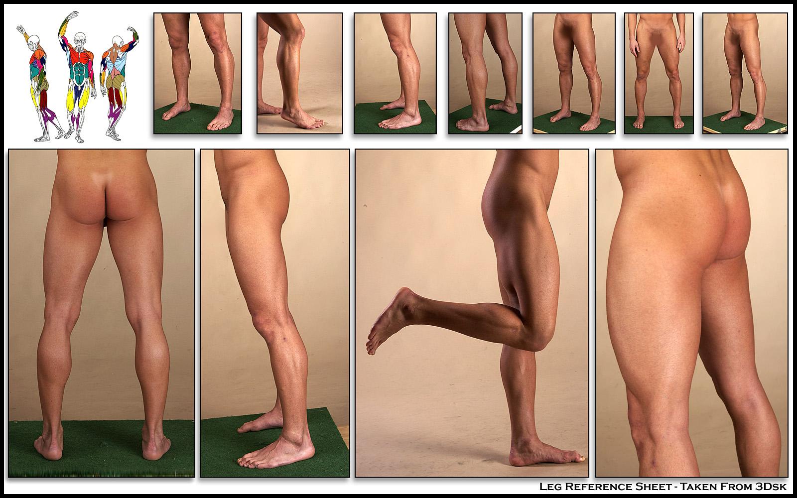 [1600-The-Human-Leg-Real]