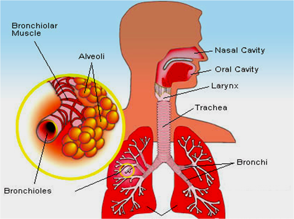 How To Cure A Bronchial Infection Naturally