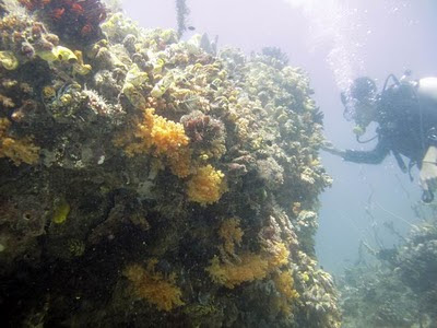 Mancing Gembira: Diving Soft Coral Raja Ampat