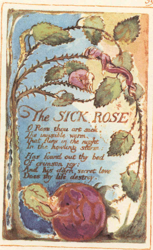 william blakes the sick rose The sick rose: a second opinion by j f berwick o rose thou art sick the invisible worm, that flies in the night in the howling storm: has found out thy bed of crimson joy: and his dark secret love does thy life destroy1 commentators on william blake's 'the sick rose' have commonly failed to explain the ironies of the song they have.