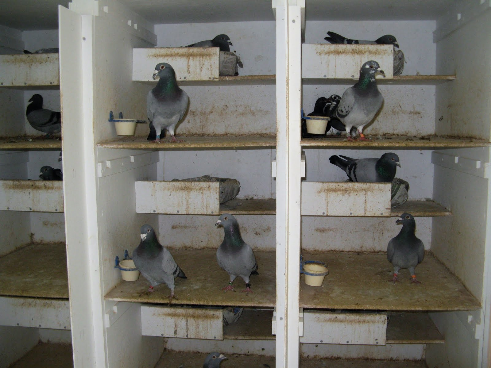 Pigeon Nest Boxes and Perches http://pigeonbeginner.blogspot.com/