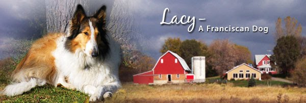 Lacy, A Franciscan Dog