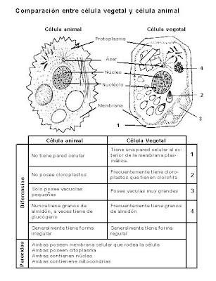 celula animal y sus partes. celula animal y sus partes. partes de la celula vegetal. partes de la celula vegetal. ct2k7. Apr 24, 04:44 PM. If honour killings are cultural