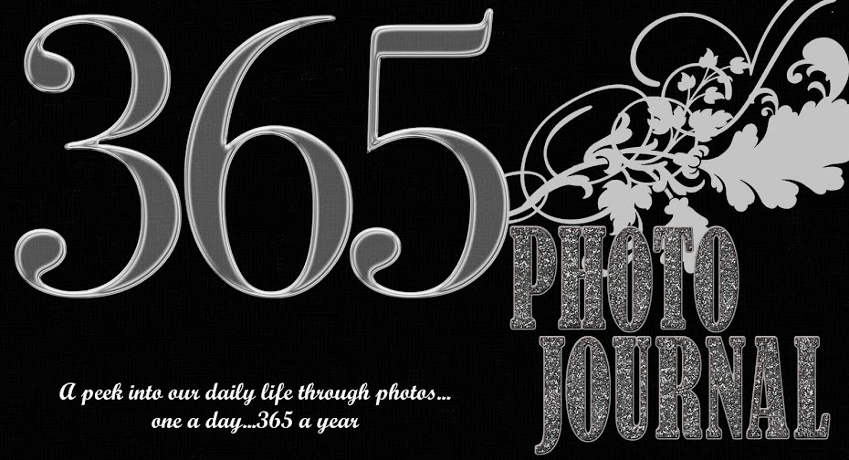 365 Photo Journal