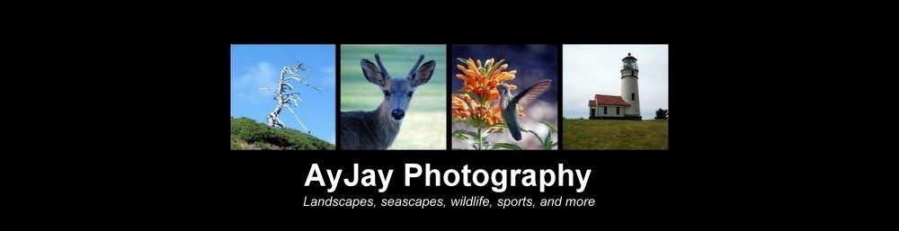 AyJay Photography