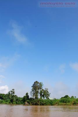 Kinabatangan River Sabah