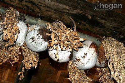 Skulls at Monsopiad Cultural Village