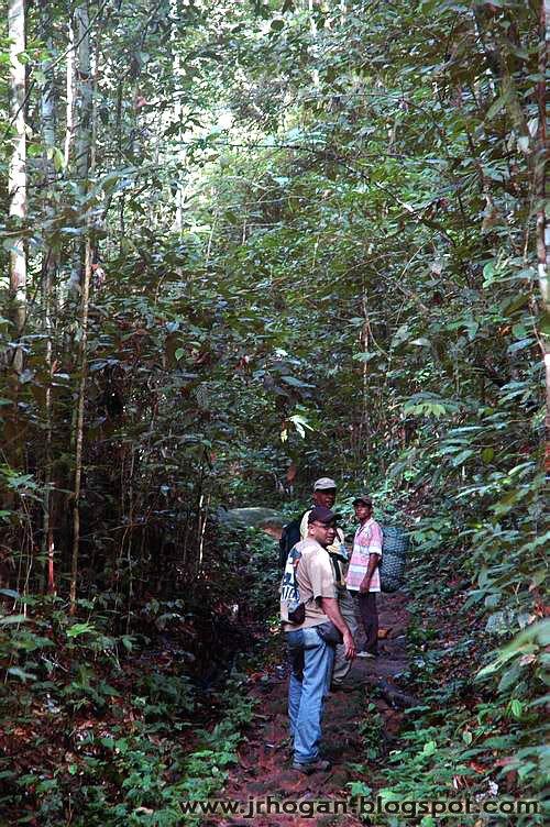 Sarawak Gunung Gading National Park