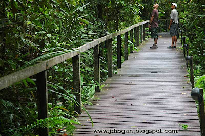 Walking at the Mulu National Park