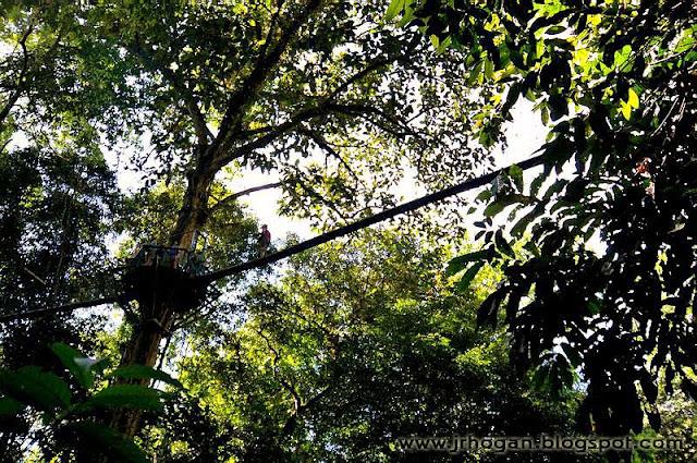 Sarawak Canopy Treetop Walk