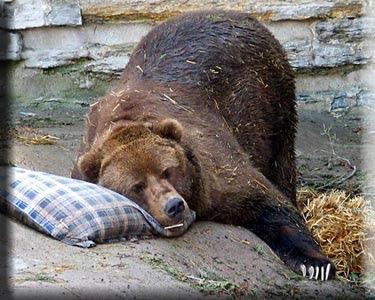 http://2.bp.blogspot.com/_sC_SQSNxiKA/SqF0MXIFM7I/AAAAAAAAAY0/J7VHbLv2WI8/s400/Sleeping-Bear.jpg