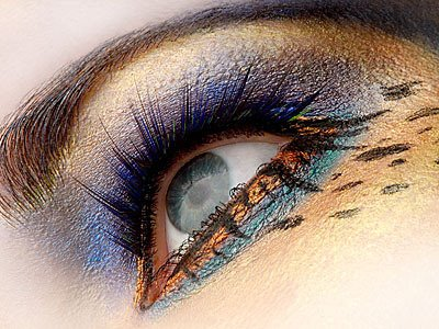Eye Envy Exotic A Kit | exotic, animal print, avante garde, eye
