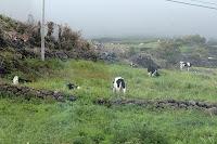 Café Portugal - PASSEIO DE JORNALISTAS nos Açores - Lajes do Pico - Vigia da Queimada