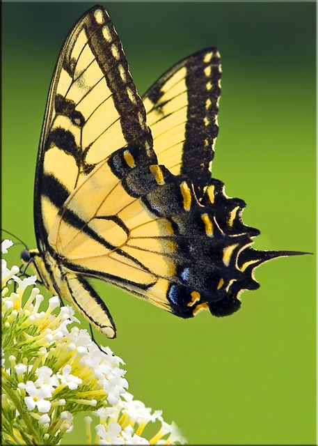 opened my purse and gingerly brought out the butterfly, still intact -2.bp.blogspot.com
