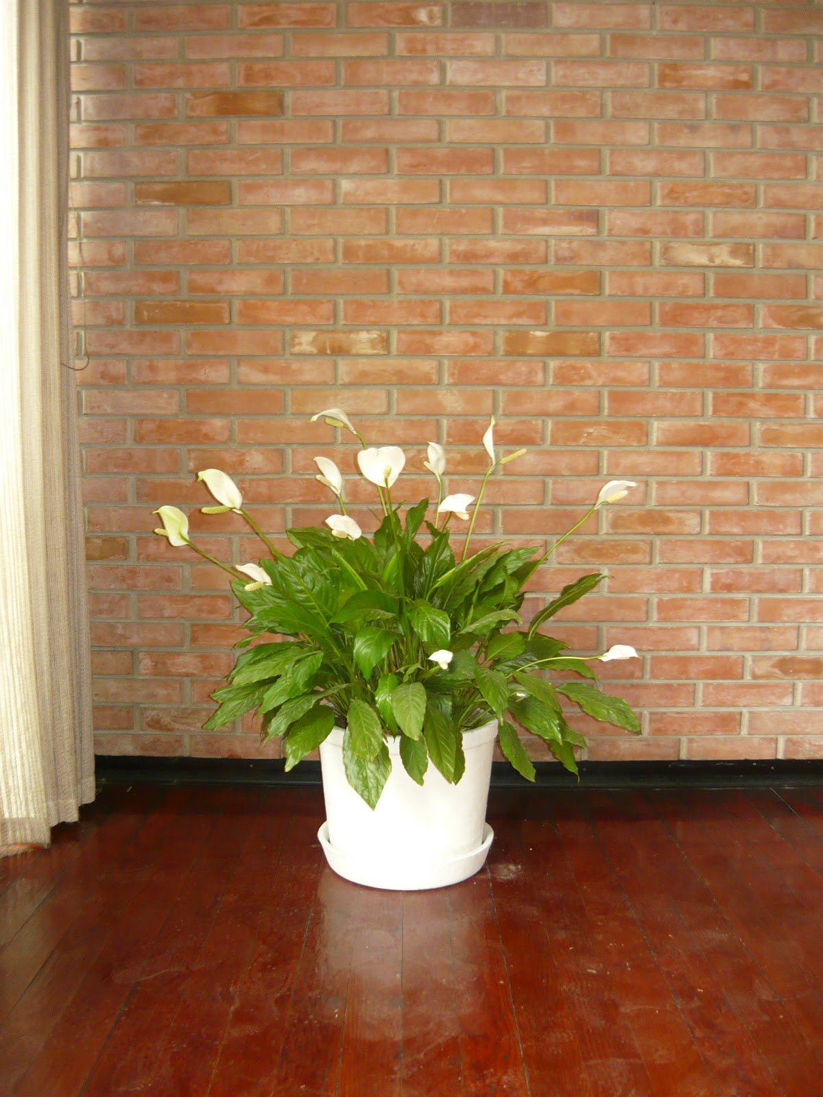 Plantas de interior macetas grandes for Macetas de interior
