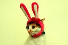 ¡Fotos de 10 Gatos con Sombrero!