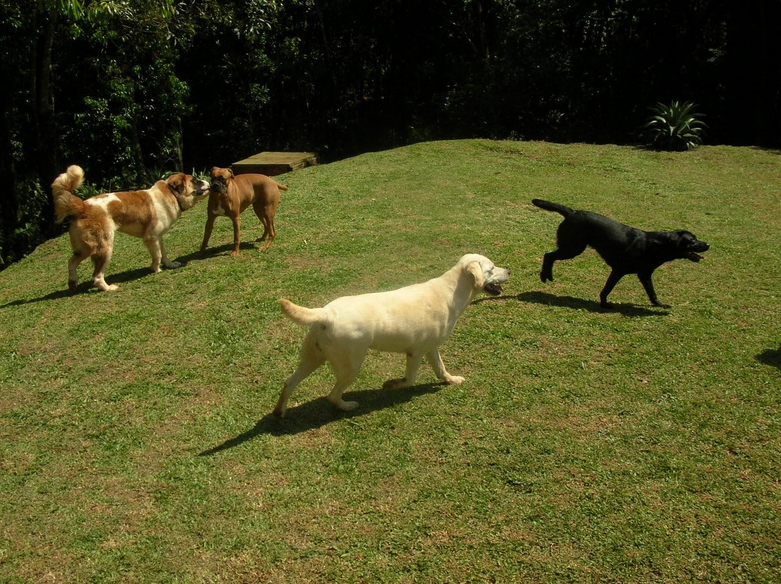 http://2.bp.blogspot.com/_sEjMhBx8jKk/TM9q2CGwiII/AAAAAAAAAzA/__oPBCM29R8/s1600/July,+Gaya,+Bella+(labrador+branco)+e+Bella+(labrador+preto).JPG