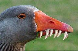 Bird Teeth