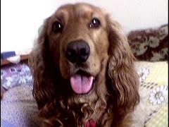 Mascota blogului
