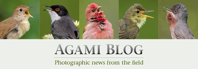 News from AGAMI image library - www.agami.nl
